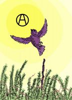 Anarchist Sparrow – Postcard